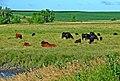 Waking Up, Iowa Farm 7-13 (15247853676).jpg