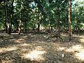 Walayar Deer Park - panoramio (4).jpg