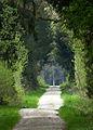 Wald bei Mödishofen 05.jpg