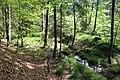 Wald im NSG bei Burgholdinghausen (SI-017).jpg