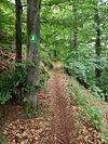Waldweg Hexenstieg (2).JPG