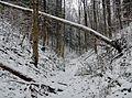 Wanderweg - panoramio (122).jpg