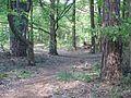 Wanderweg durch den Landsberger Busch - 03.jpg