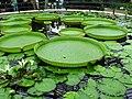 Waterlily house kg 036.jpg