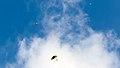 Webysther 20140125071846 - Skydive.jpg