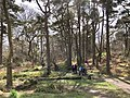 Wemyss Bay woodland walk.jpg