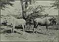 Western field (1905) (14592737869).jpg
