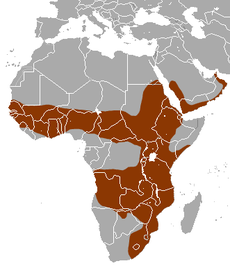 White-tailed Mongoose area.png