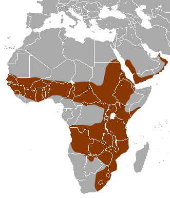 White-tailed Mongoose area
