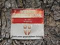 Wiener Naturdenkmal 410 - Bergahorn (Döbling) b.JPG
