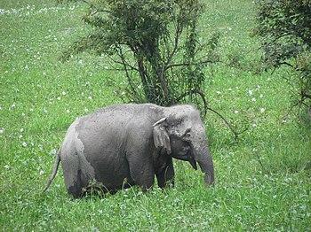Wild Baby Elephant.jpg