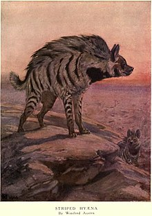 Illustration from Frank Finn's Wild Beasts of the World (1909)
