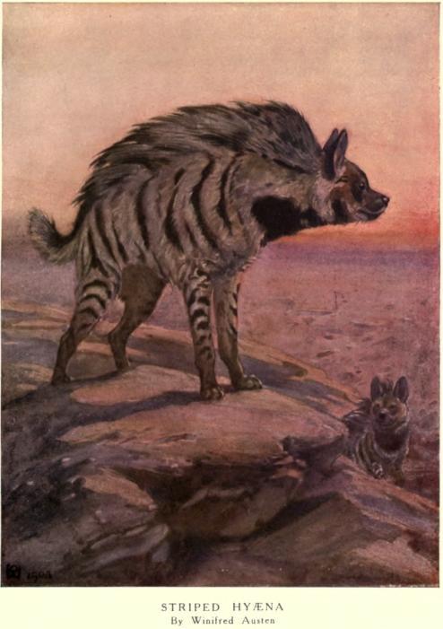 Winifred austen hyena