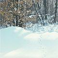 Winter in Codru (1980). (11024895455).jpg