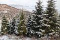 Winters in Orakzai.jpg