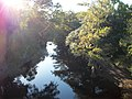 Withlacoochee River West of FL 575.JPG