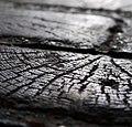 Wooden Cobblestones, Passage Saint-Maur, Paris - 02 cropped.jpg