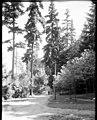 Woodland Park drive, ca 1912 (MOHAI 6147).jpg