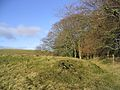 Woodland edge at Watch Knowe - geograph.org.uk - 295176.jpg