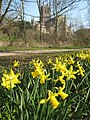 Worcester Cathedral and daffodils - geograph.org.uk - 1301928.jpg