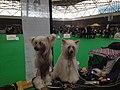 World Dog Show, Amsterdam, 2018 - 30.JPG