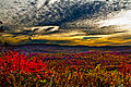 Wv-fall-foliage-mountain-sunrise - Virginia - ForestWander.jpg