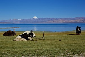 Lake Manasarovar - Lake Manasarovar with Mount Kailash in a distance.