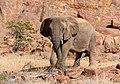 Young elephant (30167927828).jpg