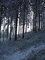 Zejście do przełęczy Krowiarki - panoramio.jpg
