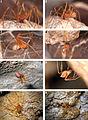 ZooKeys-215-077-g001 Trogloraptor marchingtoni.jpg