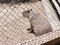 Zoobotánico Jerez (74).JPG