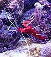 Zootopia aquarium 3.jpg