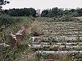 """All felled, felled, are all felled"" - geograph.org.uk - 955436.jpg"