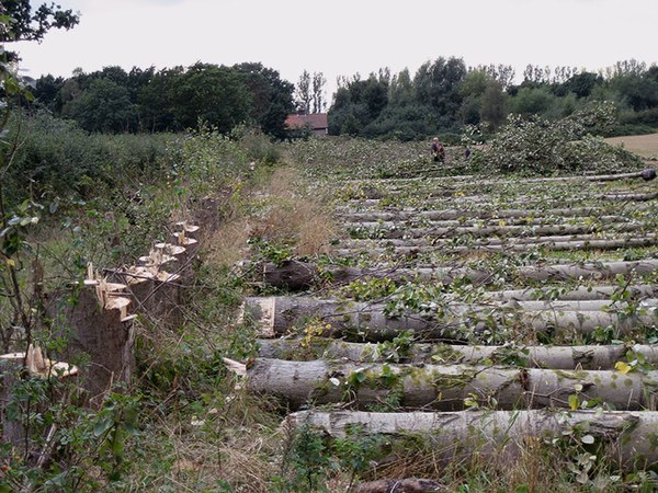 binsey poplars Knowledge4africa worksheet with questions, answers and notes for gerard manley hopkins's binsey poplars.