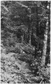"""In the woods of Dolomi, Alaska."" - NARA - 297773.tif"