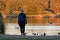 (1)Duck Pond sunset.jpg