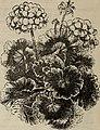 (Catalogue (1902) (20377084479).jpg