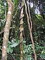 Árboles La Mochila.jpg