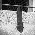 Živinski zvonec na pasu iz Innsbrucka, Martin Žužek, Gorenje Gradišče 8 1952.jpg