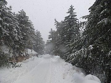 Χιονισμένος Αίνος.jpg