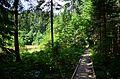 Єко-стежка навколо Озірця.jpg