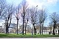 Алея вікових лип у місті Вінниця.jpg