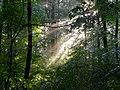 Буго-Деснянський в лісі.jpg