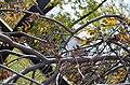 Біогрупа по вулиці Соборній, 2 у Кам'янець-Подільському. Фото 1.jpg