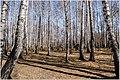 Весна на Южном Урале. - panoramio (8).jpg