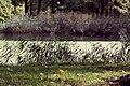 """Дача Эсворт (""""Литания"""") 5.jpg"""