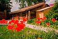 Елабуга, музей-усадьба Н.А.Дуровой, вид на хозяйственные постройки, цветущие маки.jpg