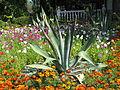 Лівадійський ботанічний сад 01.JPG