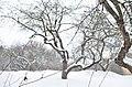 Парк Заріччя у Хмельницькому. Фото 16.jpg