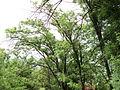 Парк шума Гази Баба во мај (28).JPG
